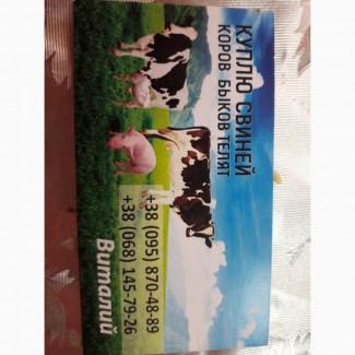 Куплю свиней, коров, быков, телят. В любых количествах