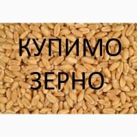 Куплю пшеницю з повишеною смітною (не класну з різними захворюваннями, фузаріозну )