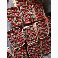 Продам полуницю з мого поля