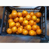 Продам пакистанские мандарины