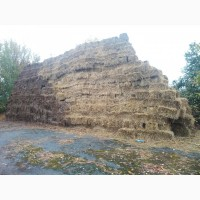 Солома в тюках(пшенична, житня )