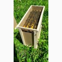 Пчелопакет карника Киевская область бджолопакет рамка 300