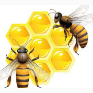 Куплю мед 55 грн/кг (с доставкой в Одессу)