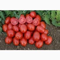 Продается помидор оптом от производителя. Есть объем