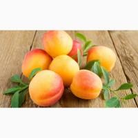 Продам нектарин и абрикос оптом