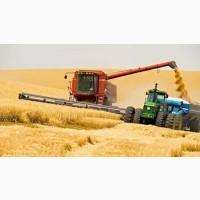 Покупаем пшеницу 2-4 класс