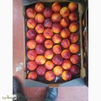Испанская агрокомпания предлогает свежые фрукты