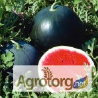 Продам семена Арбузов от производителя по оптовым ценам