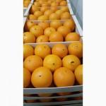 Предлагаем апельсины из Испании
