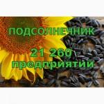 Все Производители Подсолнечника Украины - в одном документе