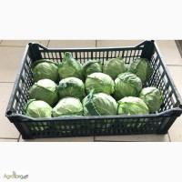 Продам капусту молодую, производство Македония