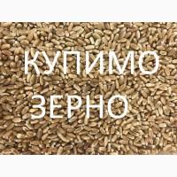 Підприємство купить пшеницю третього класу та фураж