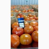 Продажа тепличного помидора оптом