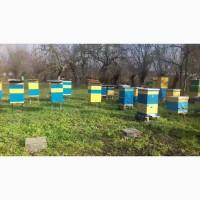 Продам бджолосімї, пасіка, бджоли