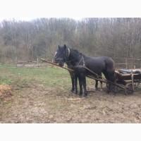 Продам робочу пару коней