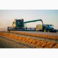 Покупаем пшеницу оптом