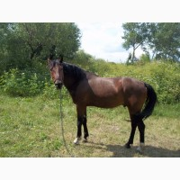 Продам коня мерин