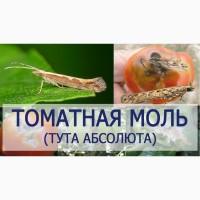 Продам феромонную ловушку для отлова Томатная минирующая моль Tuta absoluta