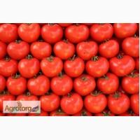 Продаем самые популярные сорта томатов