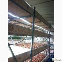 Гидропоника, продам работающий бизнес по выгонке зеленого лука, укроп