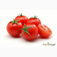 Продам семена Томатов (помидор), дешево. Оптом и в розницу