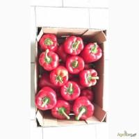 Продам перец болгарский красный, желтый (Турция) оптом