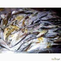 Рыба с/м некондиция