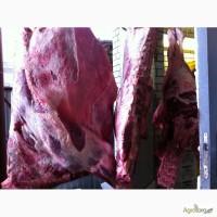 Продам говядину Халяль (Корова, Бык) на экспорт – Полутуши, четвертя, кусок, блочка