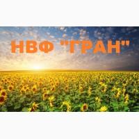 Пропонуємо насіння соняшнику Рембо, Бонд, Ауріс, Дракон, Матадор, Армагедон