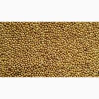Продам просо жёлтое-500 тонн, (органическое, есть европейский сертификат)