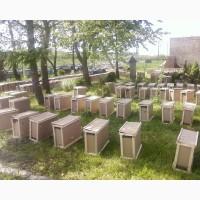 Пчелопакеты КАРПАТКА 4 рамки 3+1