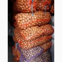Продам грецький горіх кругляк