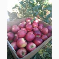 Покупаю яблоко от производителя