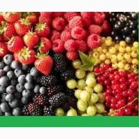 Продам сушеные ягоды и фрукты, крупным оптом