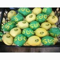Продам лимоны, сорт энтердонат