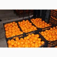 Продам мандарины сладкие свежий урожай. Турция. Грузия. Абхазия