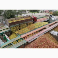 Куплю яблуко для промислової переробки