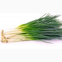 Лук зеленый перо с ндс и сертификатами