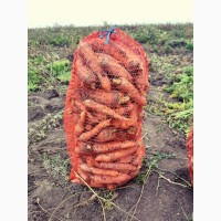 Картопля, морква