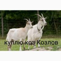 Куплю коз козлов на убой дорого