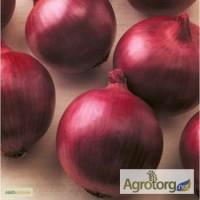 Продам семена лука оптом по низким ценам, Одесская обл