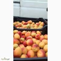 Продам абрикос