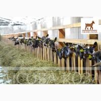 Продаются козы альпийской породы