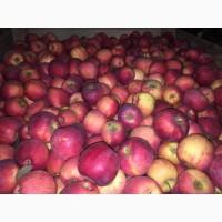 Продам яблоко з холодильника Голден, Джонаголд, Флоріна