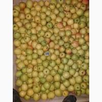 Продам яблоко 1, 2 сорта