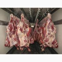 Предлагаем Мясо Свинина, Говядина