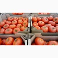 Продам помидоры, оптом томаты