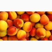 Продам свежий абрикос из сада, сорт Миндальный, Запорожская обл