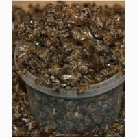 Продам пчелиный подмор
