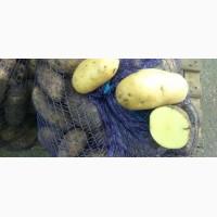 Картофель по лучшим ценам все сорта есть в наличии